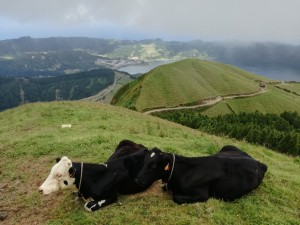 Cuimeeiras Sete Cidades with Greenzone Tours